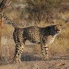 Agility: Source Like a Cheetah