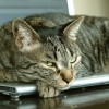 Herding Cats is not a Strategy: Move Beyond Tactics to Align for Procurement Success (Webinar)